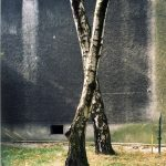 Jitka Hanzlová  Untitled (X Birch Trees), 2009 C-Print, gerahmt 48 x 37,5 cm Ed. 8
