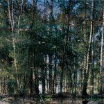 Axel Hütte, Stadtwald 02, 2011, Ditone-Print, 135 x 165 cm, Ed. 6