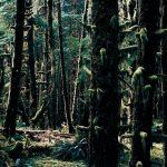 Hoh Rain Forest-2, USA, 2007, C-Print, gerahmt, 172 x 237 cm, Ed. 4