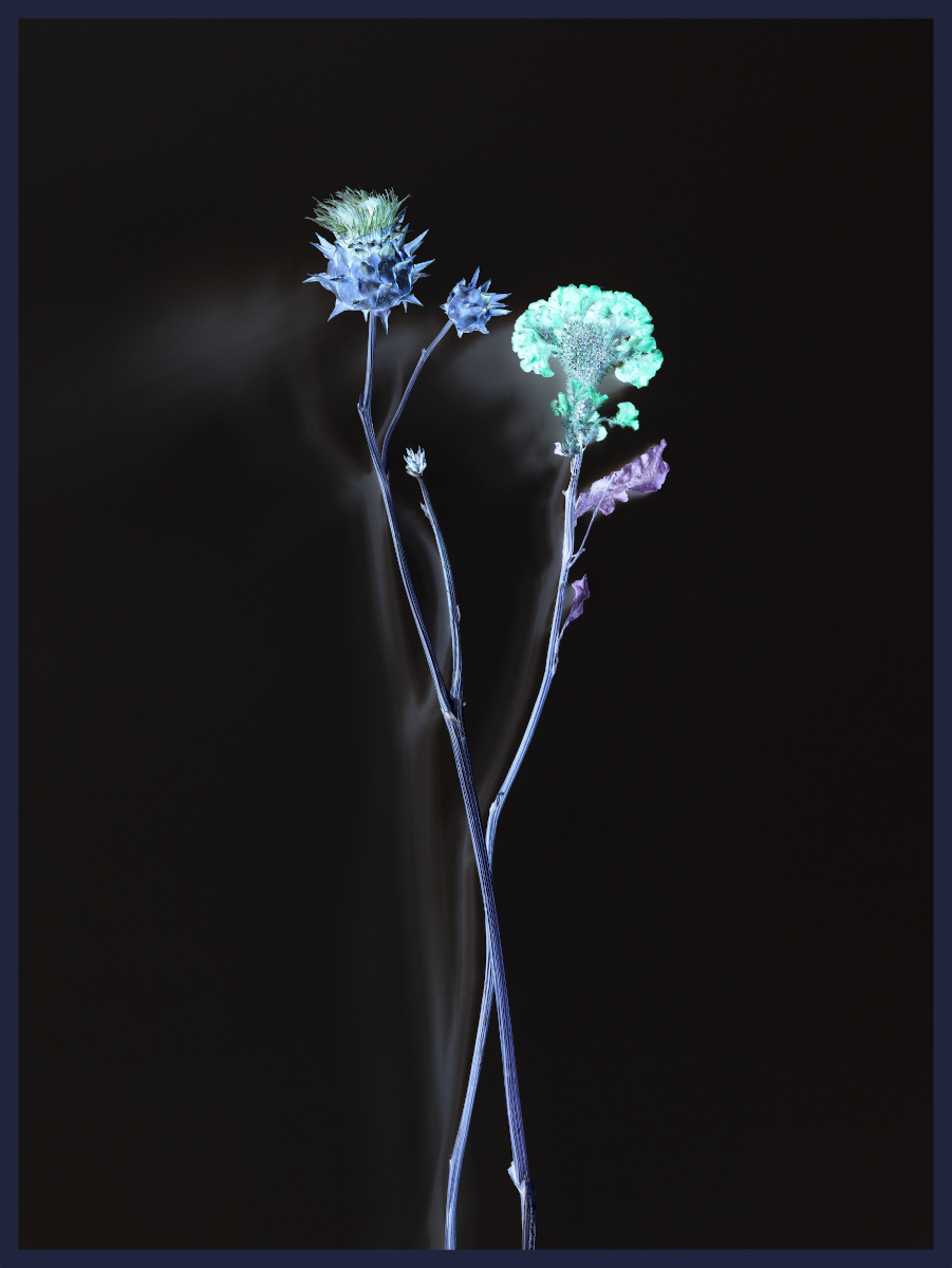 Axel Hütte, Flower_2547, 2020, Ditone Print, gerahmt, 205 x 155 cm, Ed. 4