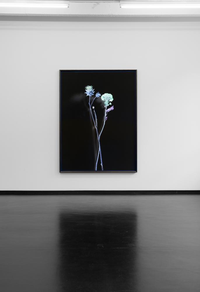 Installation view Axel Hütte - FLuORESCENCE, Galerie Wilma Tolksdorf