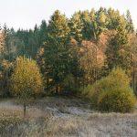 Mühlholz, Herbst 2013  C-Print, framed 49 x 59 cm Ed. 8