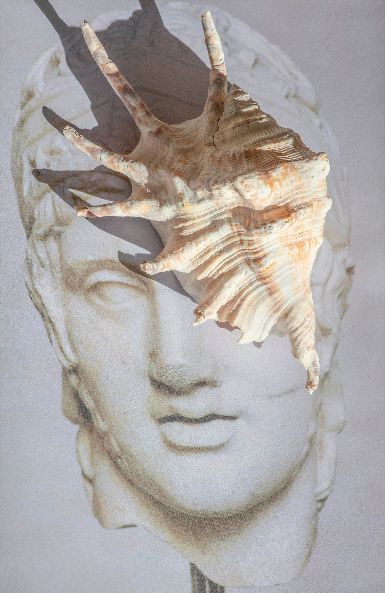 James Tunks, Lambis Lambis Shell + Head of Ares, 2020, Inkjet Print, 152 x 101 cm, framed, Ed. 3