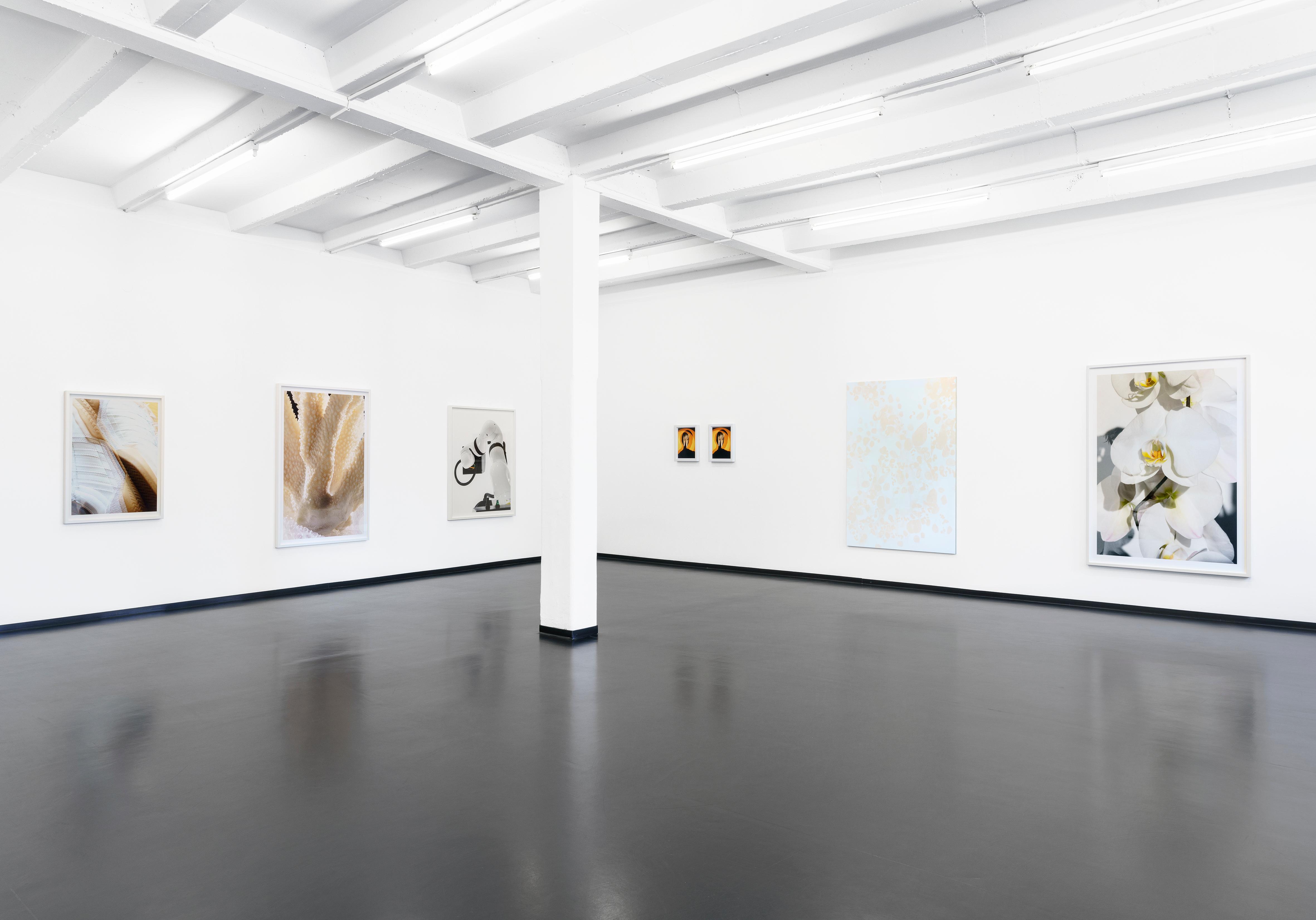 Installation view, James Tunks - Bleach, Galerie Wilma Tolksdorf